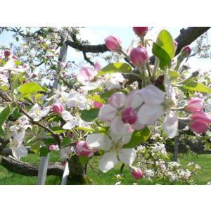 高野ウォークりんご花見.jpg